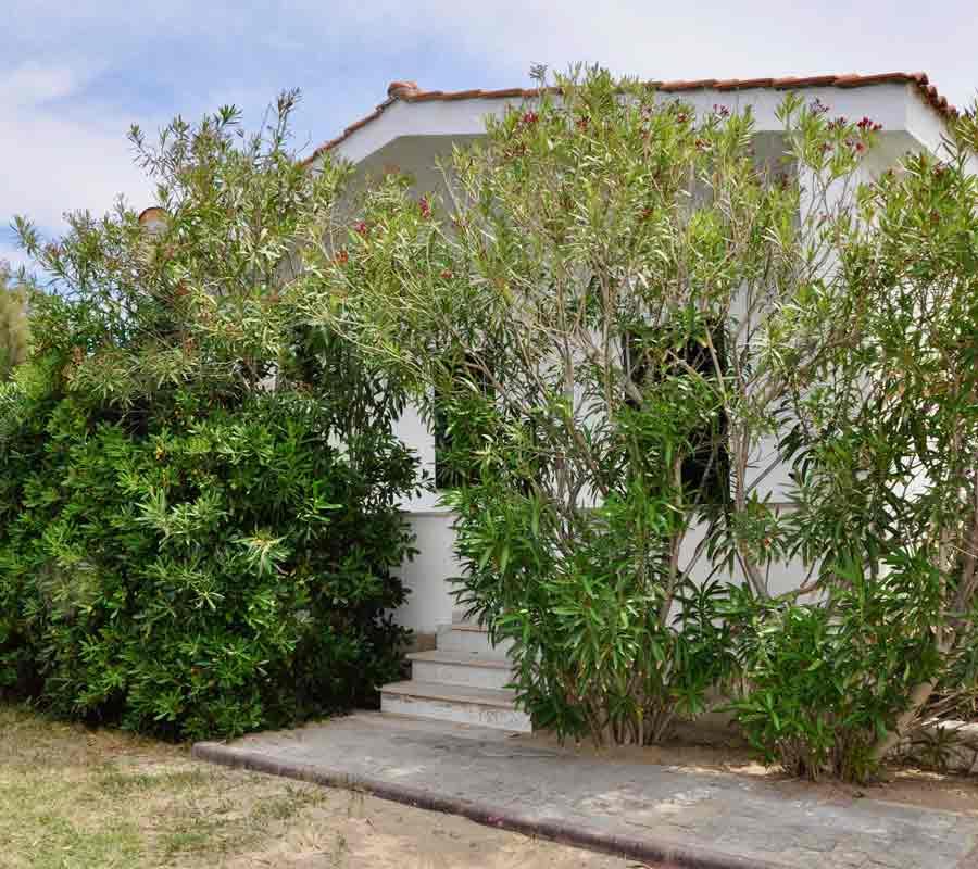 cala-azzurra-unterkunft-bungalow-strauch
